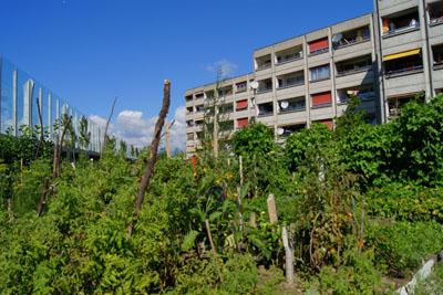 Gen veactive connaissez vous la derni re tendance en for Jardin urbain green bar